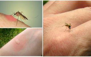 Sivrisinekler neden bazı insanları diğerlerinden daha çok ısırır?