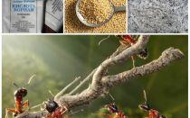 Bahçe arsa halk ilaçları mücadele karıncalar