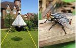 Gadflies ve gadflies için ev yapımı tuzaklar