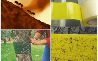Bahçedeki ağaçlarda karıncalarla nasıl baş edilir
