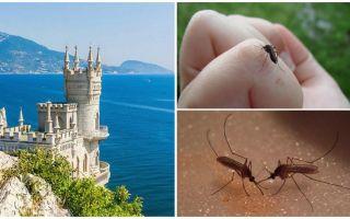 Kırım'da sivrisinekler var mı