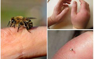 Bir insan için yararlı arı sokması nedir?