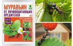 Karıncalar gelen Ants 10g: kullanım ve yorumlar için talimatlar