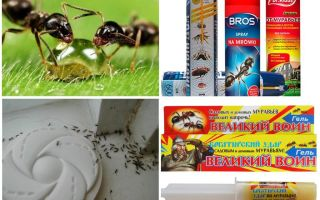Karıncalar ve karınca yuvası nasıl yok edilir