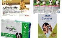 Köpeklerde pire kurtulmak, pire en etkili yolu