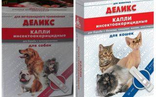 Kediler ve köpekler için lezzetli pire düşer