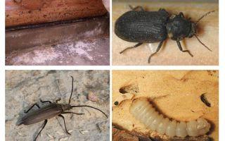 Böceği böceği kurtulmak için nasıl
