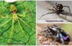 Dünyanın en güzel örümcekleri
