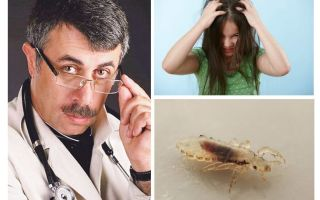 Dr. Komarovsky'nin pediküloz üzerine Önerileri