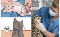 Bir kedi ya da kedi evde pire kurtulmak nasıl