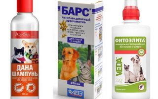 Köpekler için en popüler ve etkili pire şampuanı