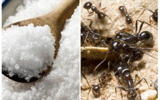 Bahçede karıncalar karşı tuz