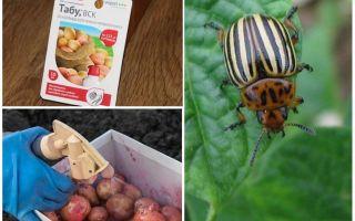 Ne zaman ve ne patatese ve patates patates böceği patates işlemek için
