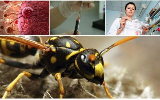 Brezilyalı Wasp Zehiri