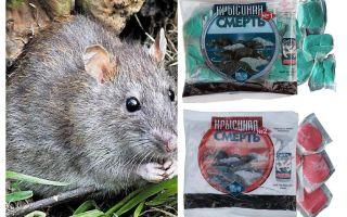 Zehirli sıçan ölüm