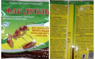 Bedbugs gelen Fas Çift ve Süper Fas anlamına gelir