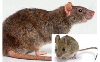 Fare ve fare arasındaki fark nedir?