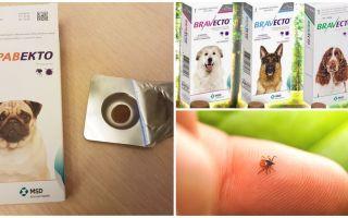 Köpekler için keneler gelen tabletler Bravekto