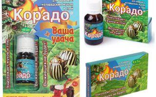 Colorado Patates böceği Corado kullanımı için talimatlar