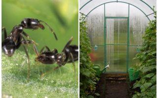 Sera halk ilaçları karıncalar nasıl başa