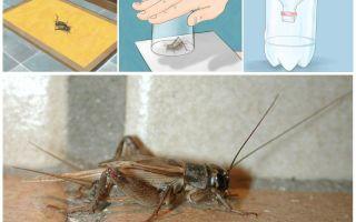 Bir apartman veya evden cırcır böcekleri nasıl çekilir