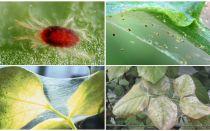 Örümcek akarlarından nasıl kurtulur: uyuşturucu ve mücadele yöntemleri