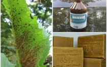 Kalsiyum yaprak biti - uygulama yöntemi ve etkinliği