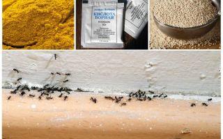 Ülkedeki evdeki karıncalardan para