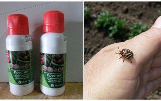 Colorado Patates böceği aracı prestij