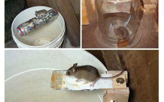 Kendi elleriyle bir fare kapanı nasıl yapılır