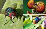 Saniyede kaç kare bir sinek görür ve kaç gözü vardır