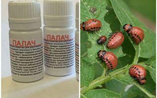 Colorado patates böceği aracı Cellat