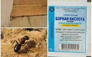 Bir ahşap evden karıncalar nasıl kaldırılır
