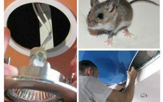 Streç tavan fareler nasıl kurtulmak