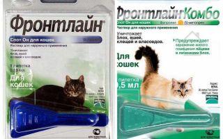 Frontline pire kediler için düşer
