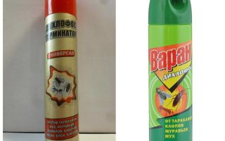 Bedbugs gelen diklorphos