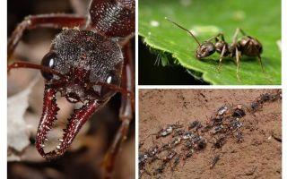 Karıncalar hakkında her şey