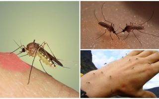 Neden doğada sivrisinekler