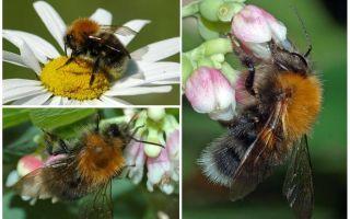 Tanım ve şehir bumblebee fotoğrafı