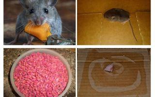 Garajdan fareler nasıl alınır