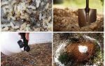 Bahçe halk ilaçları karıncalar nasıl alınır