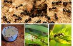 Hangi karıncalar korkuyor