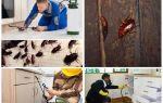 Evde bir dairede hamamböceği mücadele