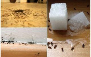 Evde bir daireden karıncalar nasıl kaldırılır