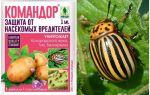 Colorado Patates Böceği Komutanı