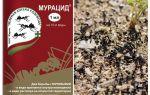 Karıncalar muracid