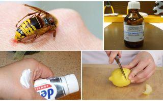 Evde bir yaban arısı sokması kaşıntısı nasıl ve nasıl rahatlatır