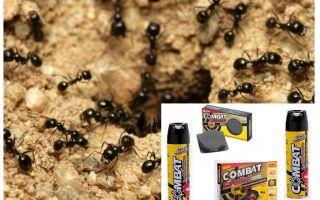 Karınca Savaş Çözümleri