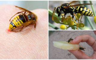 Ne ve nasıl bir eşek arısı