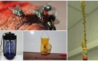 Ülkede sineklerle nasıl baş edilir